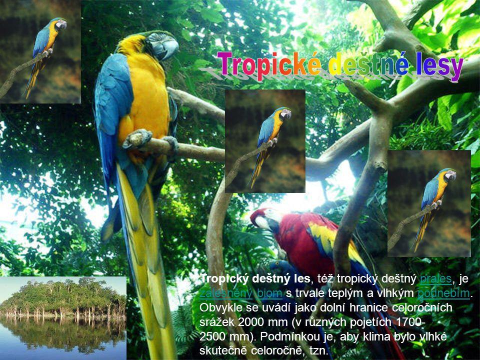 Tropický deštný les, též tropický deštný prales, je zalesněný biom s trvale teplým a vlhkým podnebím. Obvykle se uvádí jako dolní hranice celoročních