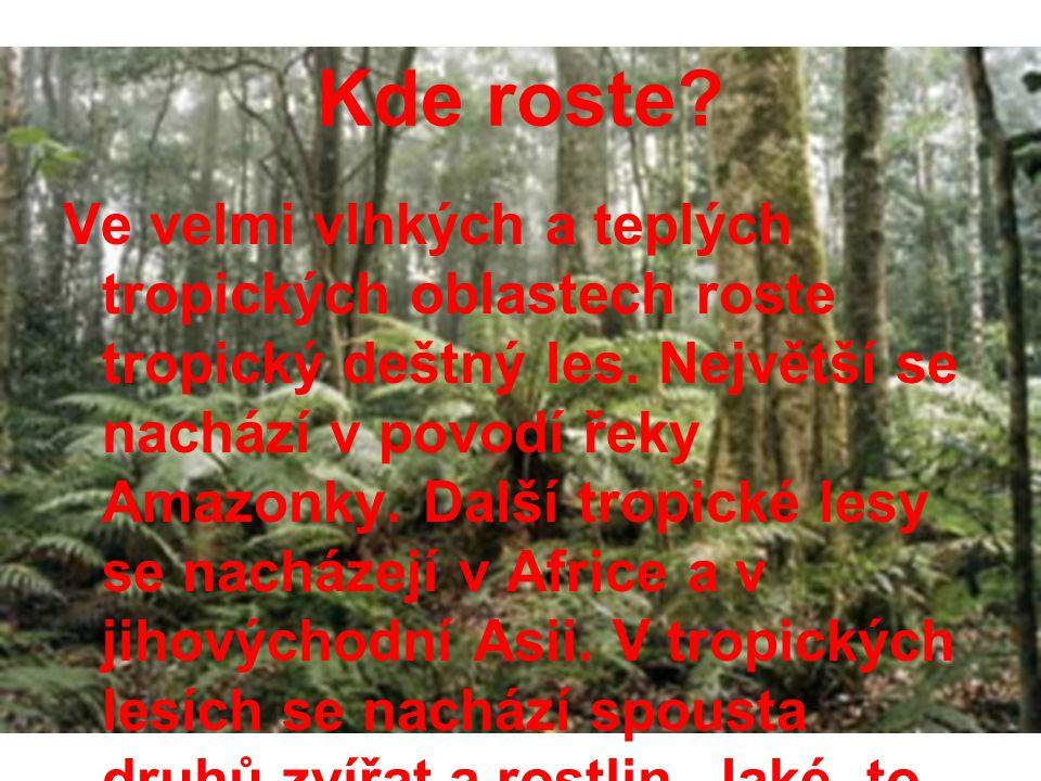 Kde roste? Ve velmi vlhkých a teplých tropických oblastech roste tropický deštný les. Největší se nachází v povodí řeky Amazonky. Další tropické lesy