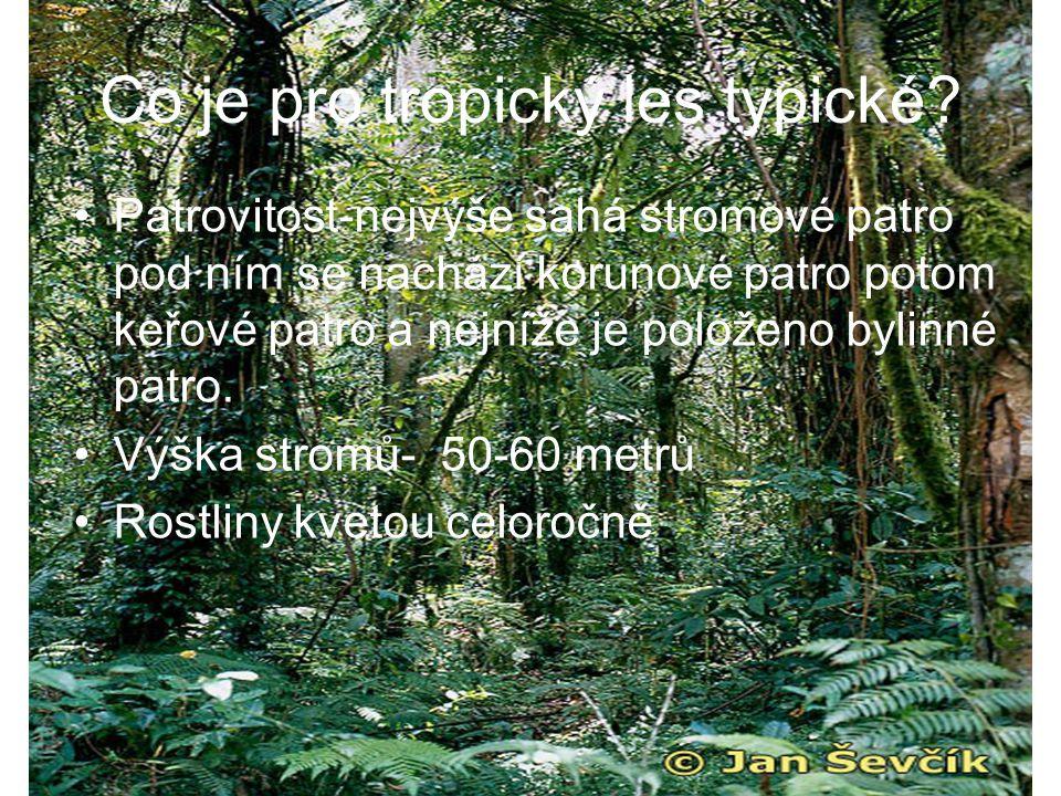 Co je pro tropický les typické? Patrovitost-nejvýše sahá stromové patro pod ním se nachází korunové patro potom keřové patro a nejníže je položeno byl