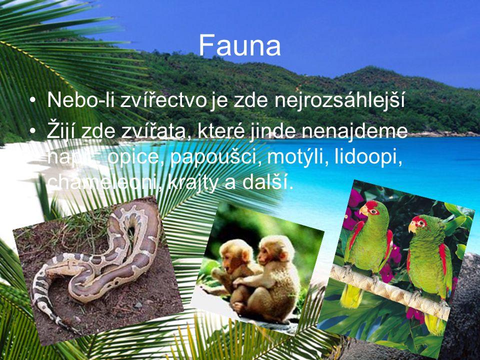 Fauna Nebo-li zvířectvo je zde nejrozsáhlejší Žijí zde zvířata, které jinde nenajdeme např.: opice, papoušci, motýli, lidoopi, chameleoni, krajty a da