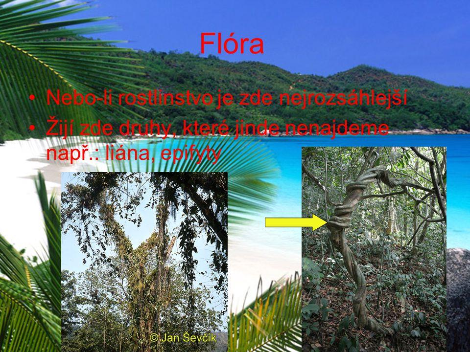 Flóra Nebo-li rostlinstvo je zde nejrozsáhlejší Žijí zde druhy, které jinde nenajdeme např.: liána, epifyty