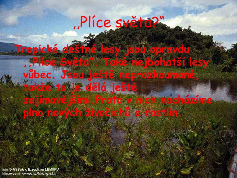 Amazonka Nejméně prozkoumaná část Světa Po obou stranách Amazonky se rozprostírá hustý prales 3 druhy lesa- 1.Bažinný-většinu roku zaplaven 2.Lužní-každým rokem pravidelně zaplaven 3.Deštný-nikdy není zaplaven
