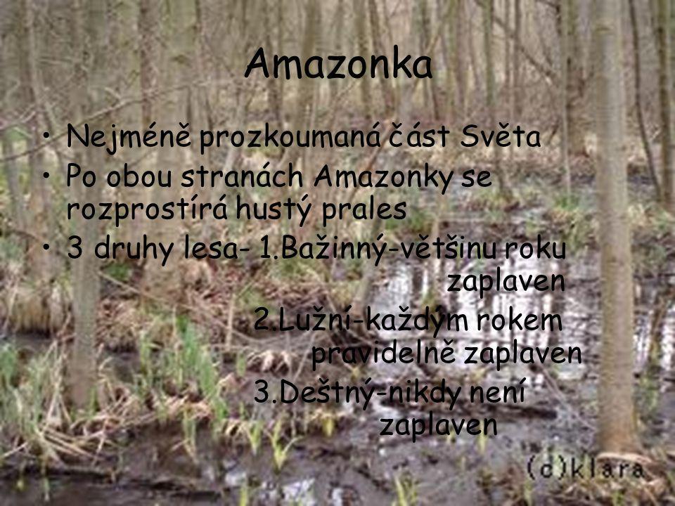Amazonka Nejméně prozkoumaná část Světa Po obou stranách Amazonky se rozprostírá hustý prales 3 druhy lesa- 1.Bažinný-většinu roku zaplaven 2.Lužní-ka