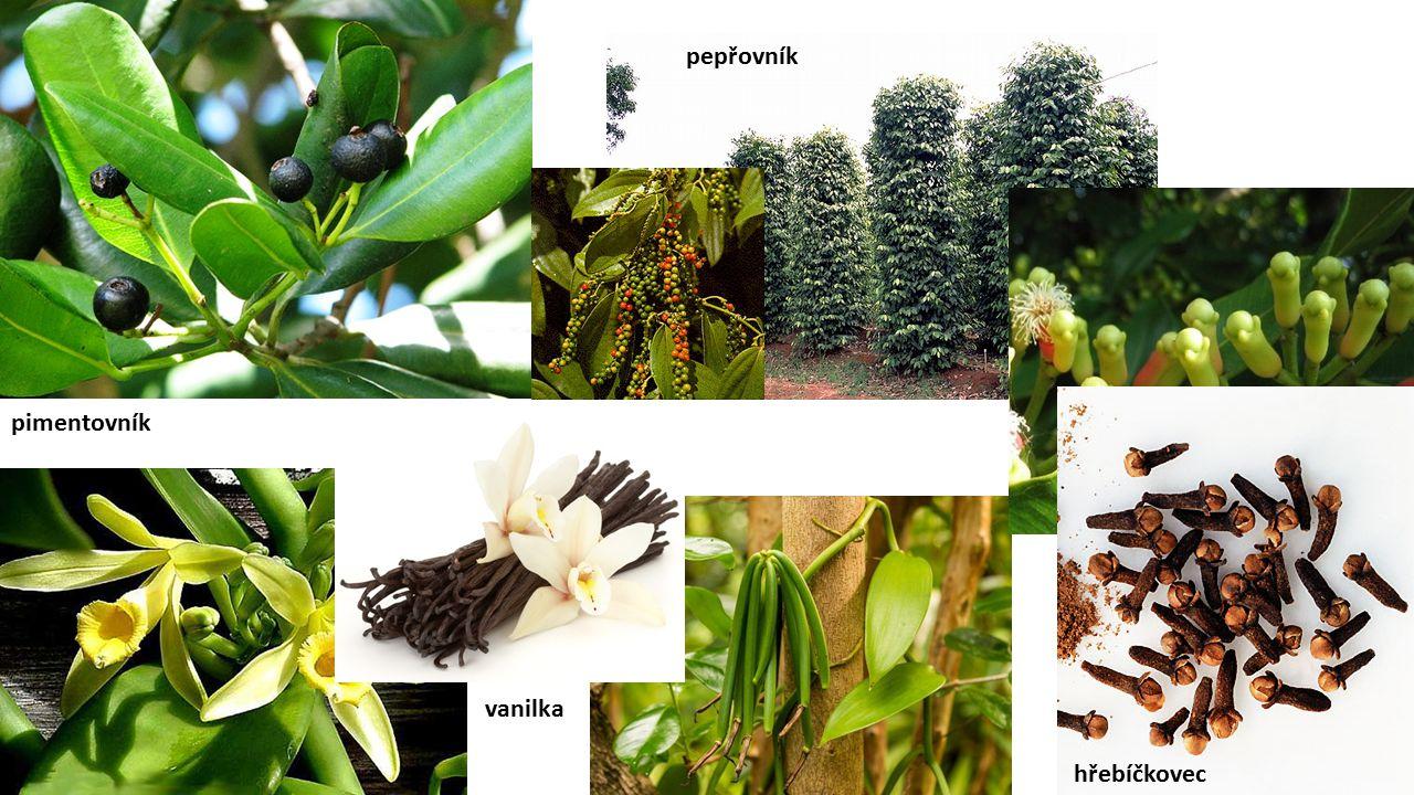 pimentovník pepřovník vanilka hřebíčkovec