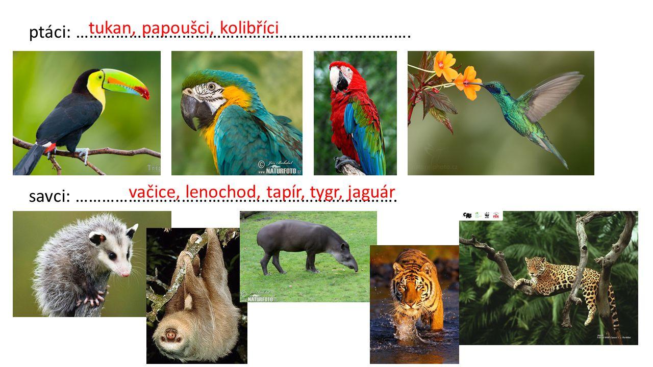 ptáci: …………………………………………………………………. savci: ………………………………………………………………. tukan, papoušci, kolibříci vačice, lenochod, tapír, tygr, jaguár