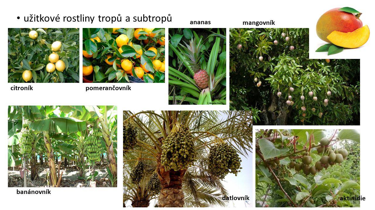 užitkové rostliny tropů a subtropů citroníkpomerančovník ananas mangovník banánovník datlovník aktinidie