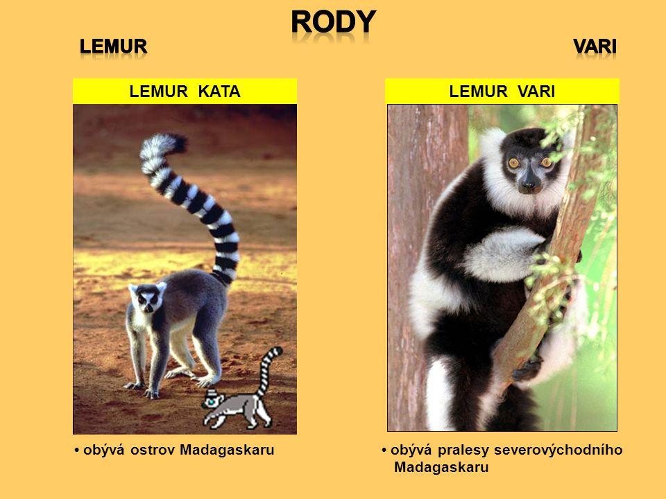 LEMUR KATA obývá pralesy severovýchodního Madagaskaru LEMUR VARI obývá ostrov Madagaskaru