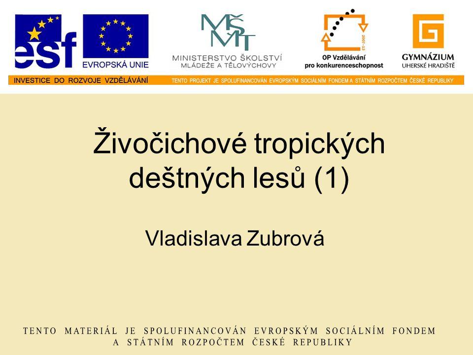 Živočichové tropických deštných lesů (1) Vladislava Zubrová