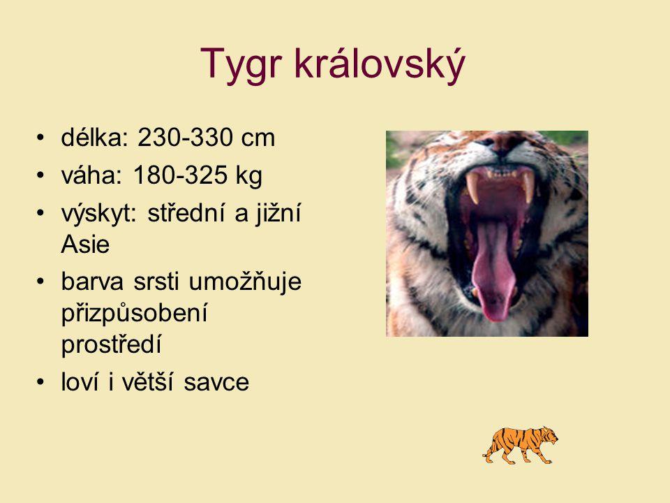 délka: 230-330 cm váha: 180-325 kg výskyt: střední a jižní Asie barva srsti umožňuje přizpůsobení prostředí loví i větší savce