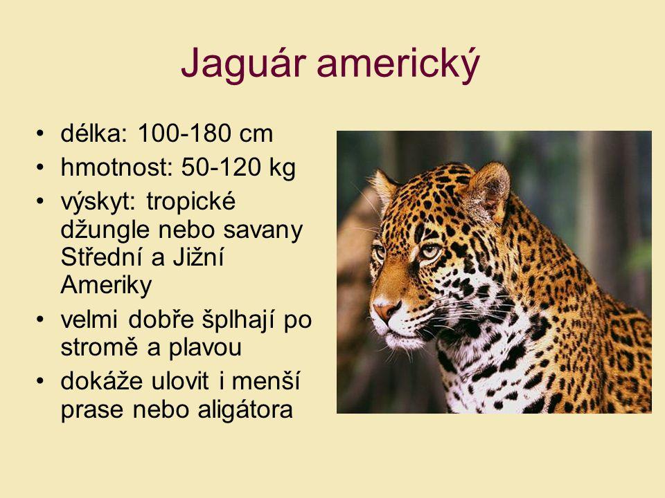 délka: 100-180 cm hmotnost: 50-120 kg výskyt: tropické džungle nebo savany Střední a Jižní Ameriky velmi dobře šplhají po stromě a plavou dokáže ulovi