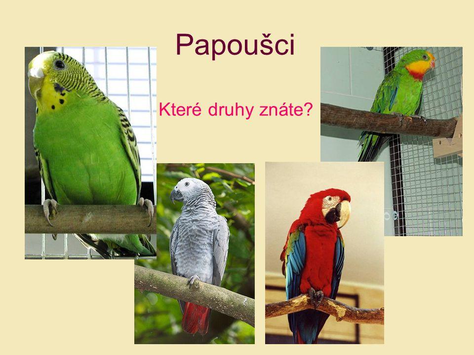 Papoušci Které druhy znáte?