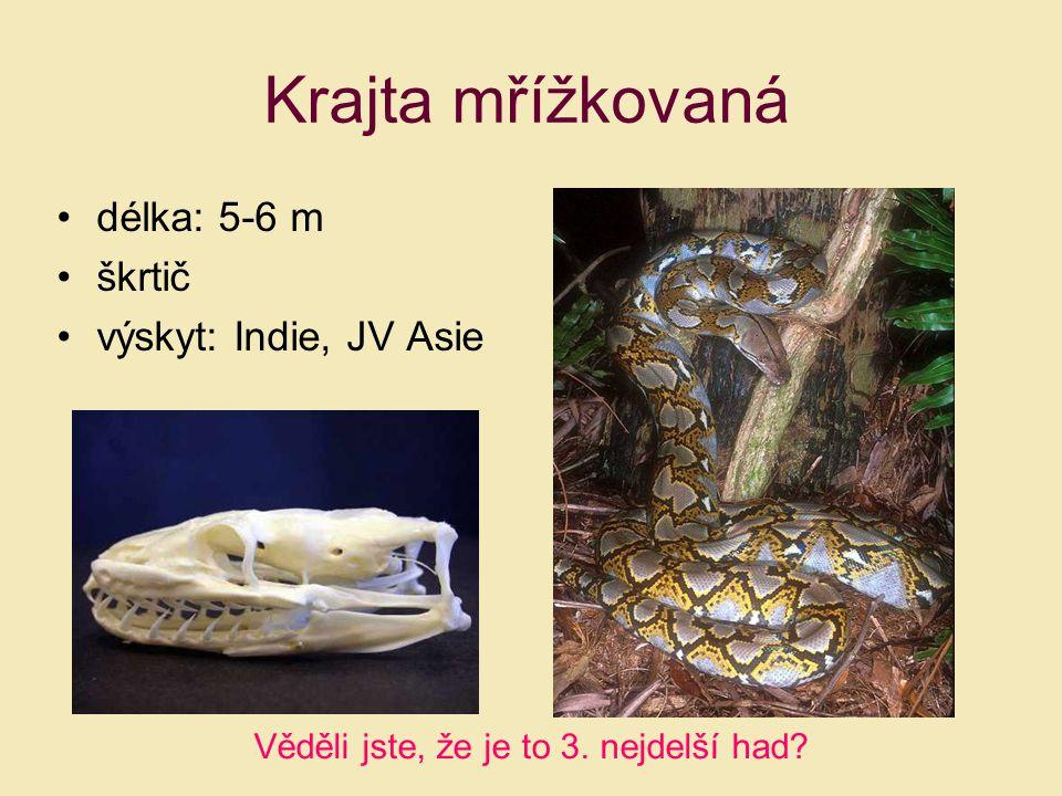 Krajta mřížkovaná délka: 5-6 m škrtič výskyt: Indie, JV Asie Věděli jste, že je to 3. nejdelší had?