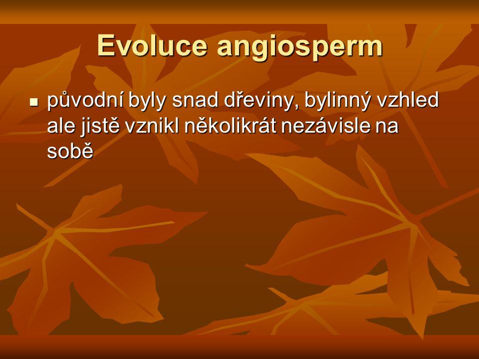Evoluce angiosperm původní byly snad dřeviny, bylinný vzhled ale jistě vznikl několikrát nezávisle na sobě původní byly snad dřeviny, bylinný vzhled ale jistě vznikl několikrát nezávisle na sobě
