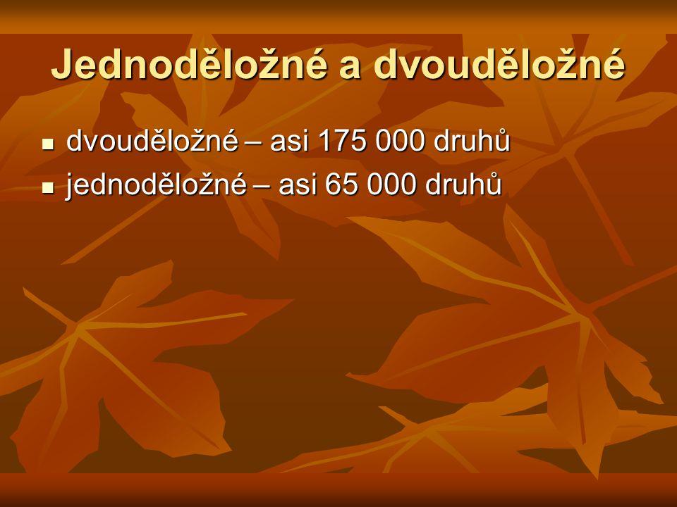 Jednoděložné a dvouděložné dvouděložné – asi 175 000 druhů dvouděložné – asi 175 000 druhů jednoděložné – asi 65 000 druhů jednoděložné – asi 65 000 d