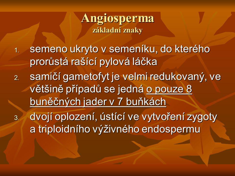 Angiosperma základní znaky 1.semeno ukryto v semeníku, do kterého prorůstá rašící pylová láčka 2.