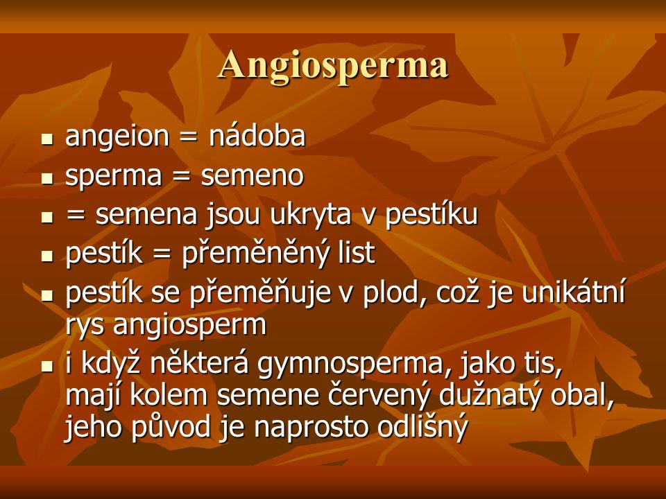 Angiosperma angeion = nádoba angeion = nádoba sperma = semeno sperma = semeno = semena jsou ukryta v pestíku = semena jsou ukryta v pestíku pestík = p