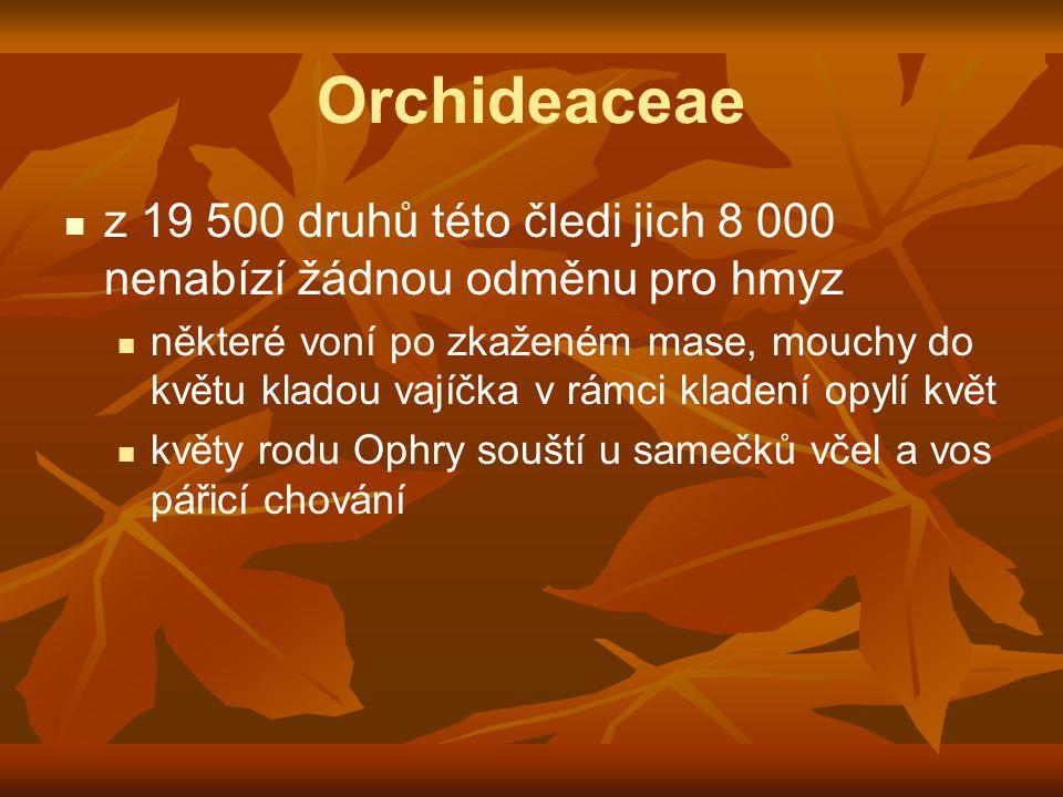 Orchideaceae z 19 500 druhů této čledi jich 8 000 nenabízí žádnou odměnu pro hmyz některé voní po zkaženém mase, mouchy do květu kladou vajíčka v rámc