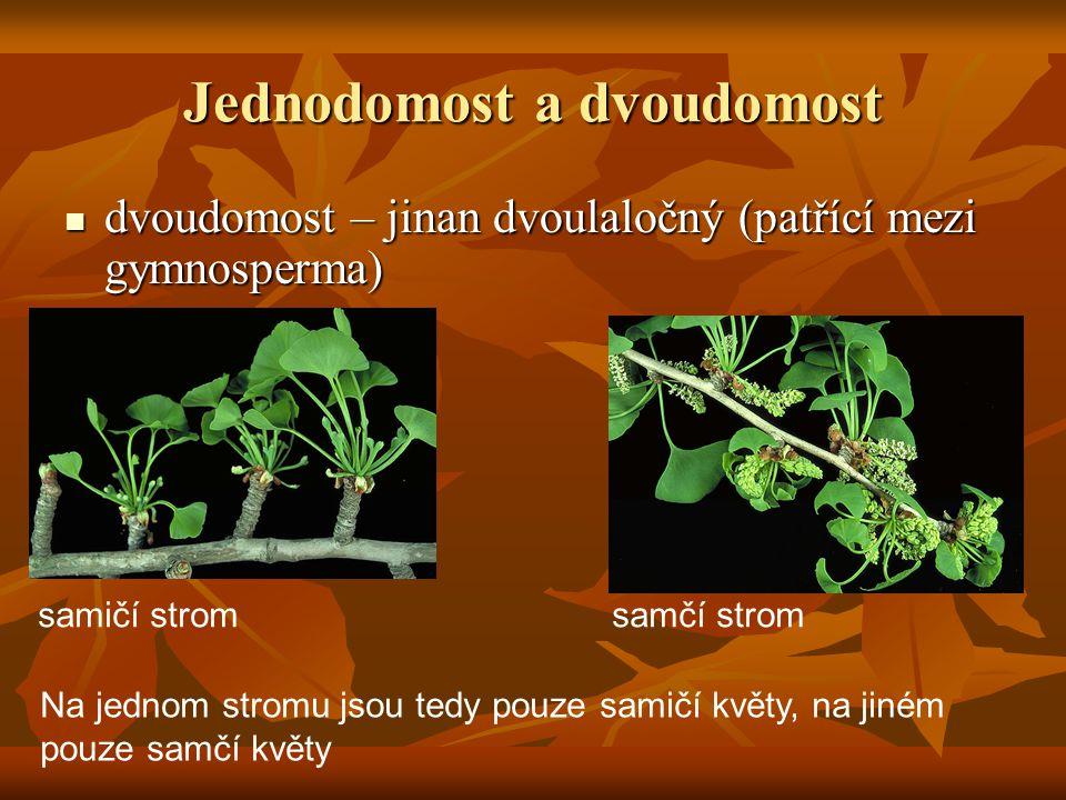 Jednodomost a dvoudomost dvoudomost – jinan dvoulaločný (patřící mezi gymnosperma) dvoudomost – jinan dvoulaločný (patřící mezi gymnosperma) Na jednom stromu jsou tedy pouze samičí květy, na jiném pouze samčí květy samičí strom samčí strom