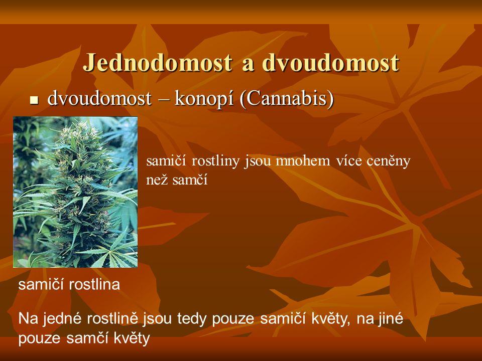 Jednodomost a dvoudomost dvoudomost – konopí (Cannabis) dvoudomost – konopí (Cannabis) Na jedné rostlině jsou tedy pouze samičí květy, na jiné pouze s