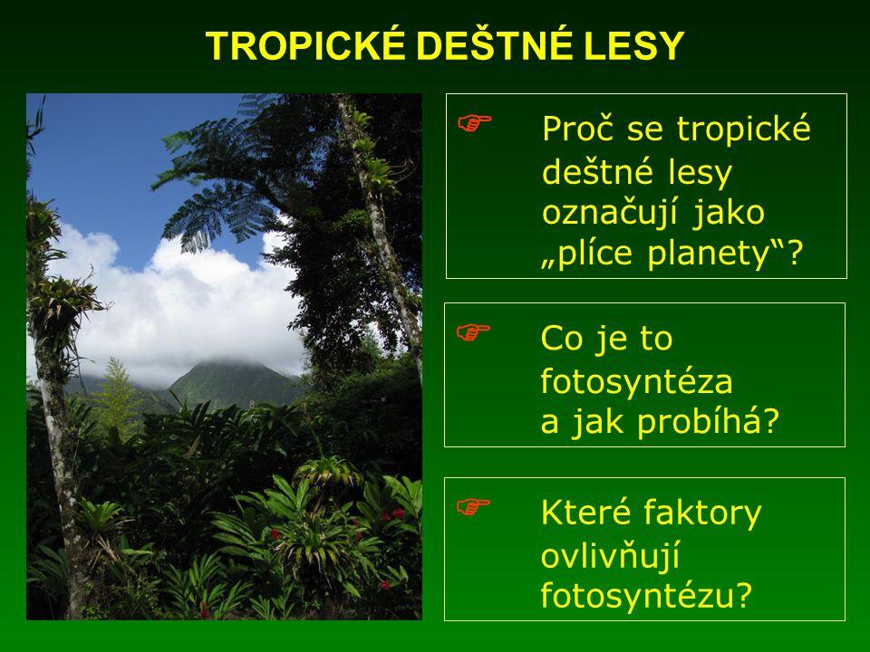 """ Proč se tropické deštné lesy označují jako """"plíce planety""""?  Co je to fotosyntéza a jak probíhá?  Které faktory ovlivňují fotosyntézu? TROPICKÉ DE"""