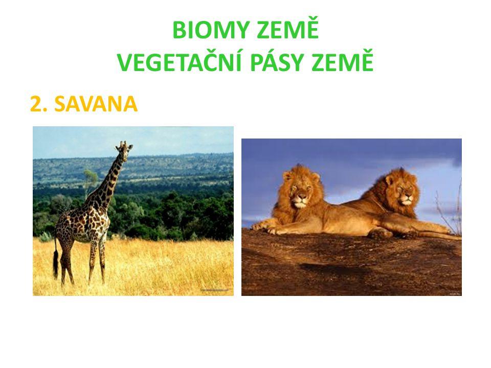 BIOMY ZEMĚ VEGETAČNÍ PÁSY ZEMĚ 2. SAVANA