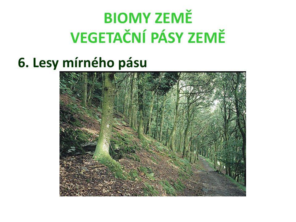 BIOMY ZEMĚ VEGETAČNÍ PÁSY ZEMĚ 6. Lesy mírného pásu