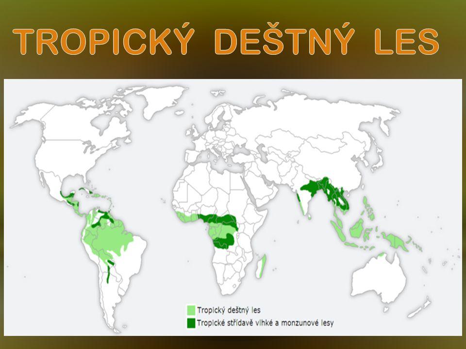 V roce 1989 zbylo na světě osm milionů čtverečních kilometrů deštných pralesů, tedy o něco méně než polovina původní prehistorické plochy.