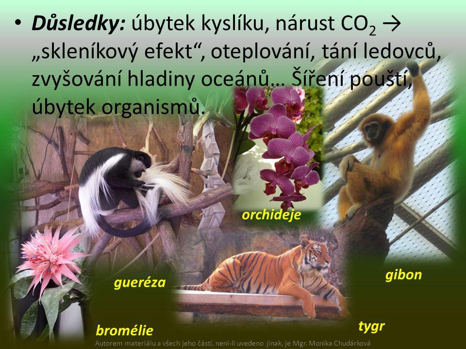 """Důsledky: úbytek kyslíku, nárust CO 2 → """"skleníkový efekt , oteplování, tání ledovců, zvyšování hladiny oceánů… Šíření pouští, úbytek organismů."""