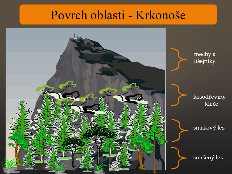 Povrch oblasti - Krkonoše smíšený les smrkový les kosodřeviny kleče mechy a lišejníky