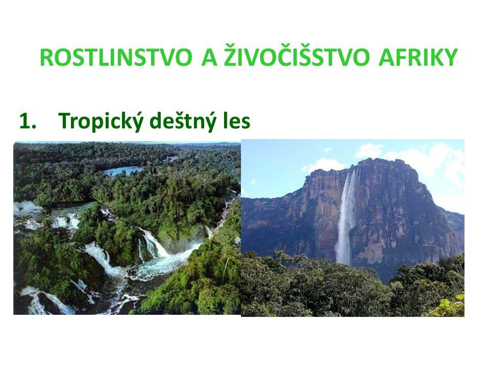ROSTLINSTVO A ŽIVOČIŠSTVO AFRIKY 1.Tropický deštný les
