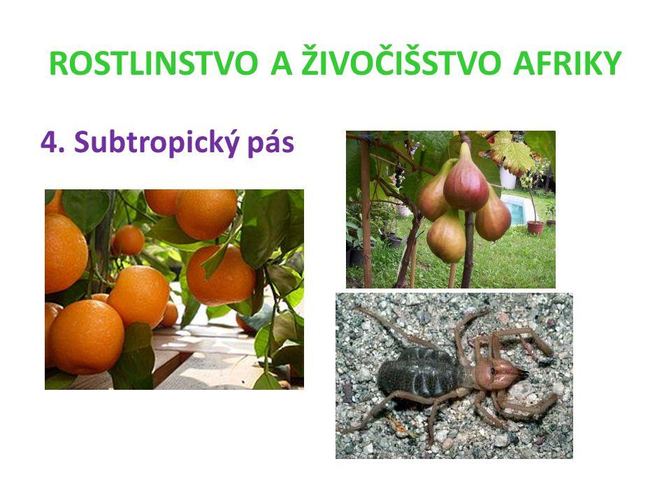 ROSTLINSTVO A ŽIVOČIŠSTVO AFRIKY 4. Subtropický pás