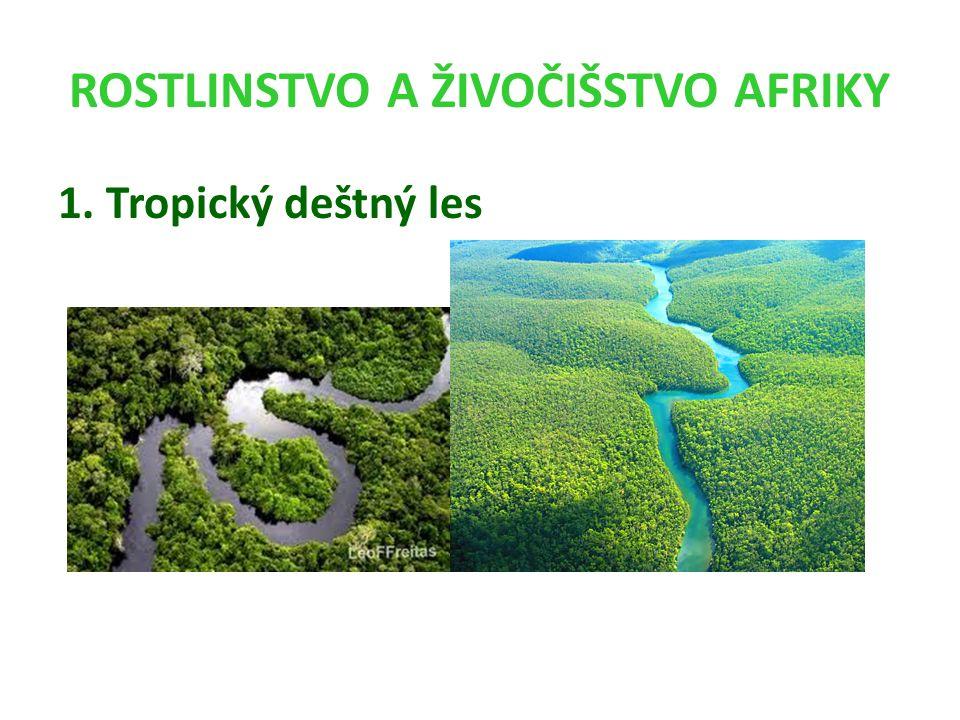 ROSTLINSTVO A ŽIVOČIŠSTVO AFRIKY 1. Tropický deštný les