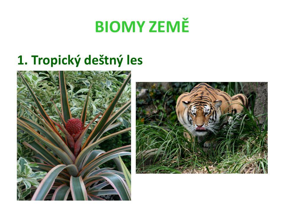 BIOMY ZEMĚ 1. Tropický deštný les