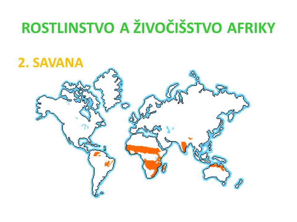 ROSTLINSTVO A ŽIVOČIŠSTVO AFRIKY 2. SAVANA