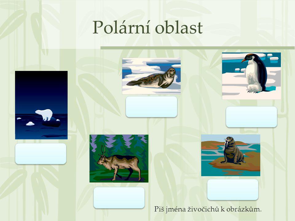 Polární oblast Piš jména živočichů k obrázkům.