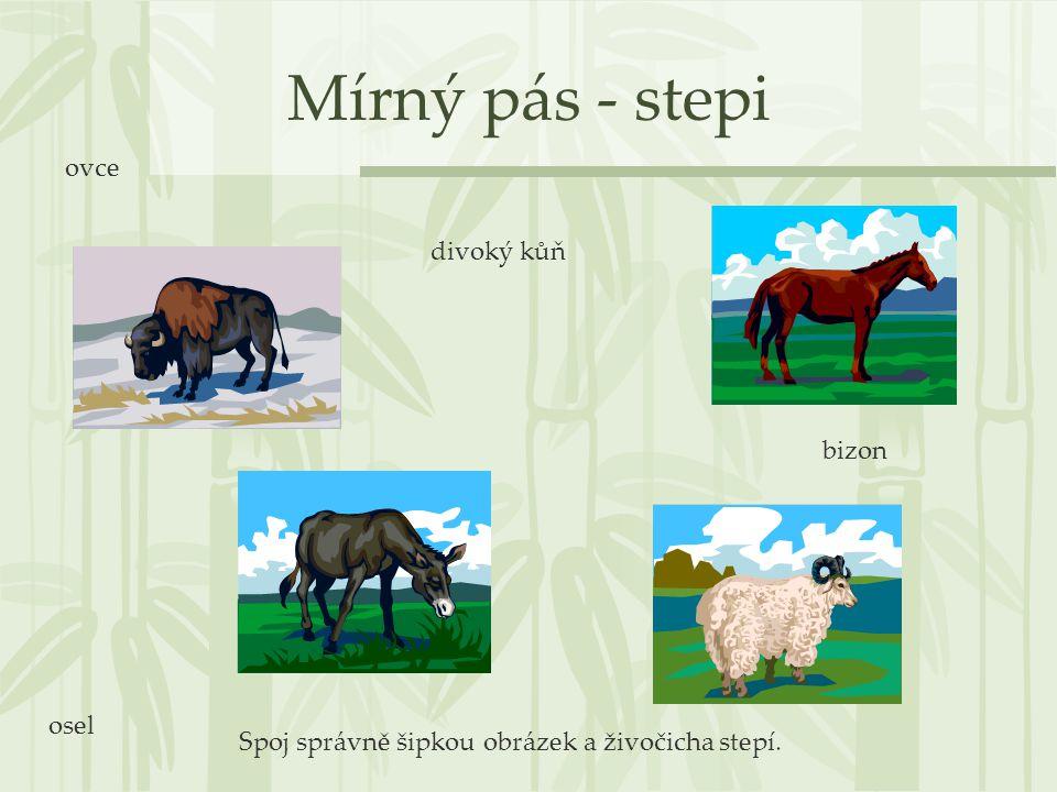Mírný pás - stepi divoký kůň osel ovce bizon Spoj správně šipkou obrázek a živočicha stepí.