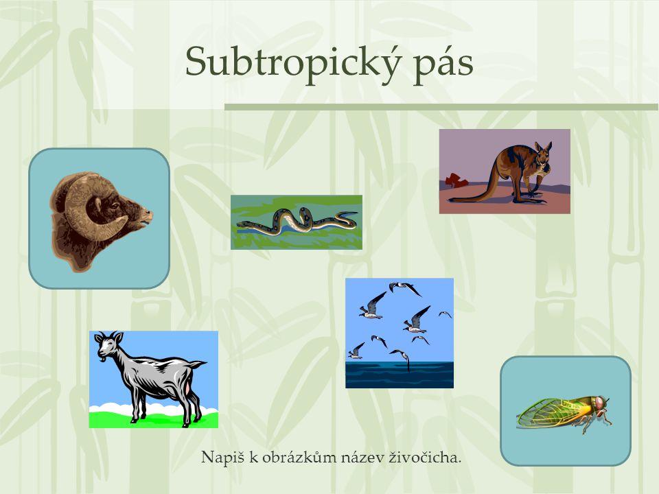 Subtropický pás Napiš k obrázkům název živočicha.