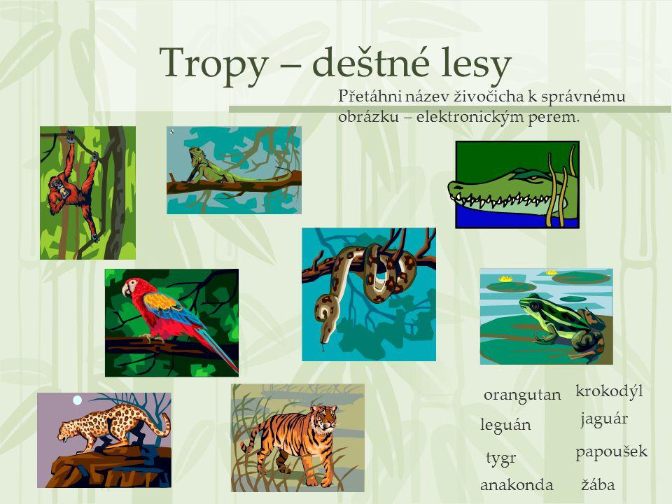 Tropy – deštné lesy orangutan leguán tygr anakonda krokodýl jaguár papoušek žába Přetáhni název živočicha k správnému obrázku – elektronickým perem.