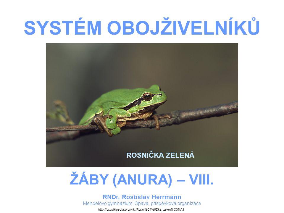 SYSTÉM OBOJŽIVELNÍKŮ – ŽÁBY – VIII.ROSNIČKOVITÍ Štíhlé žáby s hladkou kůží.