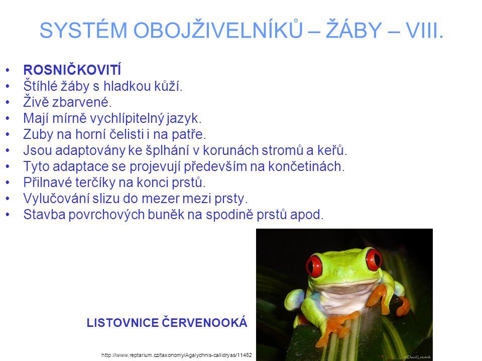 SYSTÉM OBOJŽIVELNÍKŮ – ŽÁBY – VIII. ROSNIČKOVITÍ Štíhlé žáby s hladkou kůží. Živě zbarvené. Mají mírně vychlípitelný jazyk. Zuby na horní čelisti i na