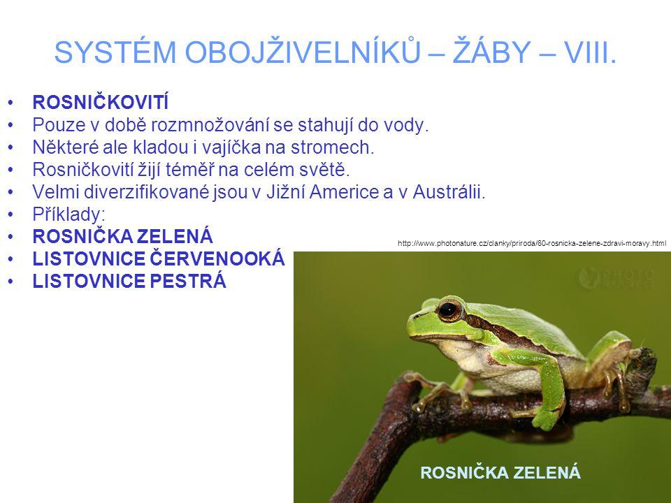 SYSTÉM OBOJŽIVELNÍKŮ – ŽÁBY – VIII.ROSNIČKA ZELENÁ –Většinou 3 - 5 cm.