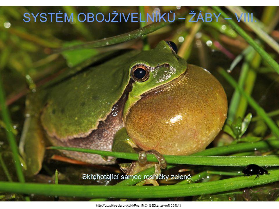 SYSTÉM OBOJŽIVELNÍKŮ – ŽÁBY – VIII. Skřehotající samec rosničky zelené. http://cs.wikipedia.org/wiki/Rosni%C4%8Dka_zelen%C3%A1