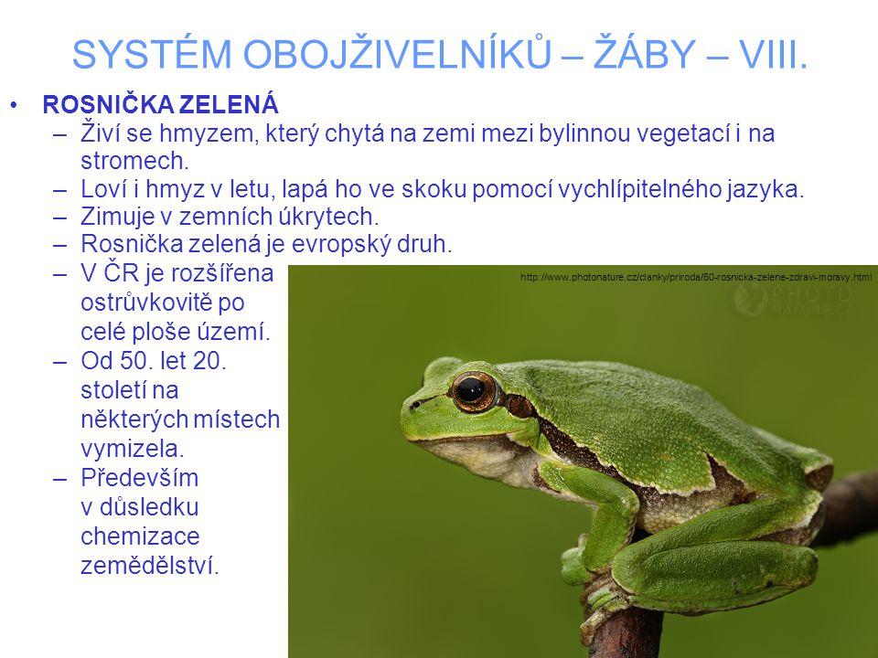 SYSTÉM OBOJŽIVELNÍKŮ – ŽÁBY – VIII. ROSNIČKA ZELENÁ –Živí se hmyzem, který chytá na zemi mezi bylinnou vegetací i na stromech. –Loví i hmyz v letu, la