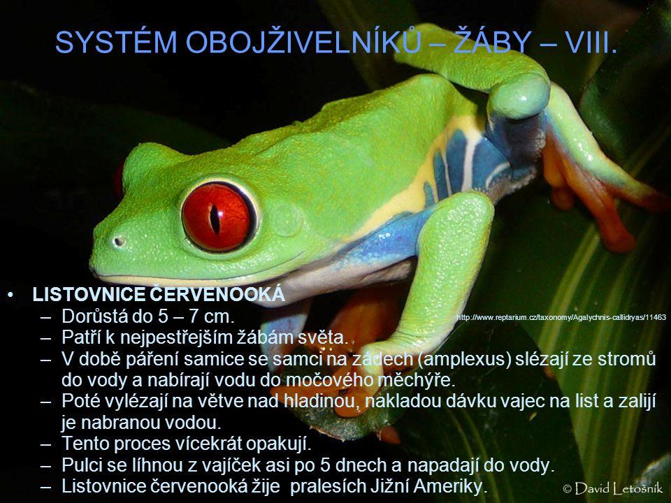 SYSTÉM OBOJŽIVELNÍKŮ – ŽÁBY – VIII. LISTOVNICE ČERVENOOKÁ –Dorůstá do 5 – 7 cm. –Patří k nejpestřejším žábám světa. –V době páření samice se samci na
