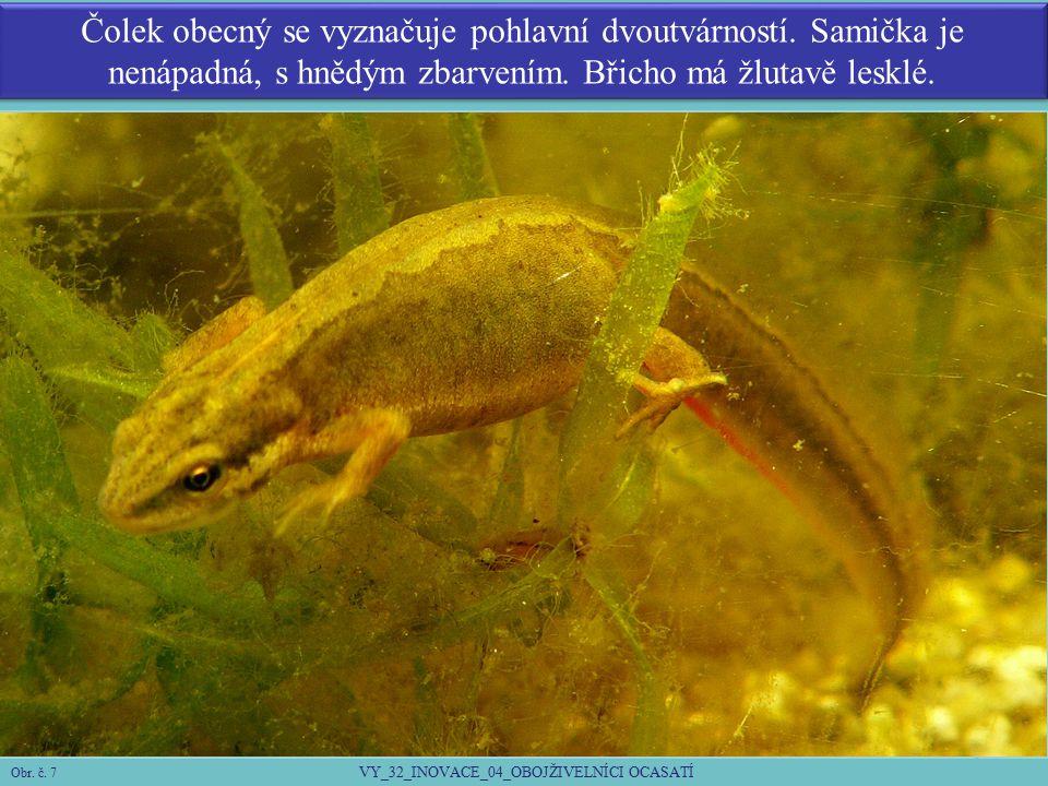 Larvy čolků dýchají vnějšími keříčkovými žábrami.Zpočátku se živí prvoky, později korýši.
