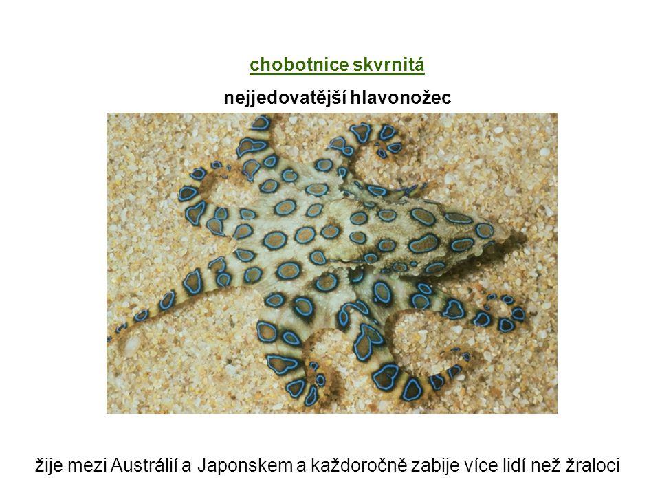 žije mezi Austrálií a Japonskem a každoročně zabije více lidí než žraloci chobotnice skvrnitá nejjedovatější hlavonožec