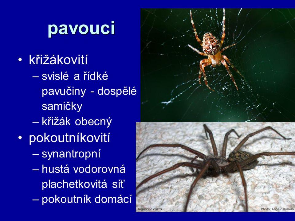 pavouci křižákovití –svislé a řídké pavučiny - dospělé samičky –křižák obecný pokoutníkovití –synantropní –hustá vodorovná plachetkovitá síť –pokoutník domácí