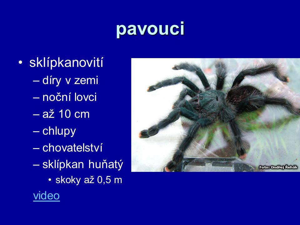 pavouci sklípkanovití –díry v zemi –noční lovci –až 10 cm –chlupy –chovatelství –sklípkan huňatý skoky až 0,5 m video