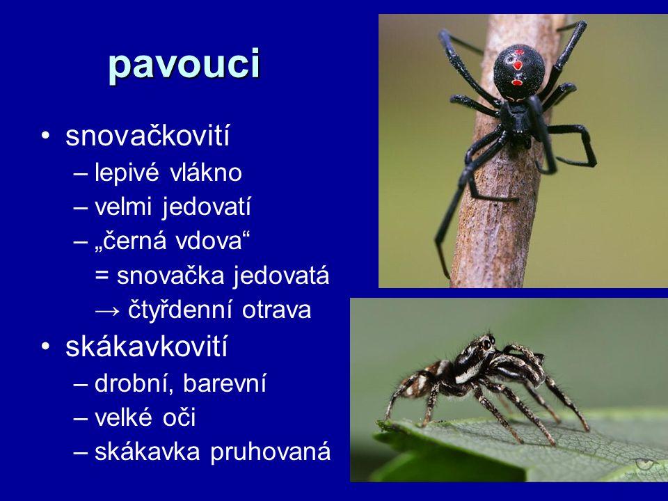 """pavouci snovačkovití –lepivé vlákno –velmi jedovatí –""""černá vdova = snovačka jedovatá → čtyřdenní otrava skákavkovití –drobní, barevní –velké oči –skákavka pruhovaná"""