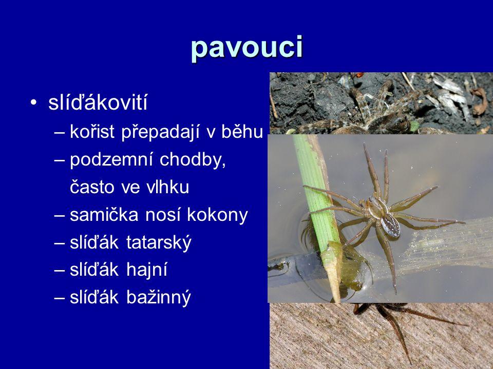 pavouci slíďákovití –kořist přepadají v běhu –podzemní chodby, často ve vlhku –samička nosí kokony –slíďák tatarský –slíďák hajní –slíďák bažinný